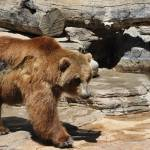 """""""brown bear"""" by BethsSpecialMoments"""