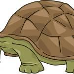 """""""big turtle"""" by cartoonfactory"""