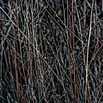"""Multicolored Reeds at Twilight"" by SherylKaras"
