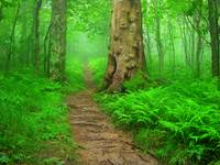 Appalachian Trail (The A.T.) Great Smoky Mountains
