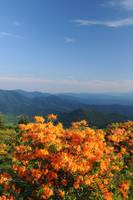 Roan Mountain, Jane Bald Flame Azalea Rolling Rang