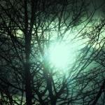 """solarGreen"" by IndigoPoet"