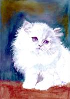 Adorable Silver and White Persian Cat