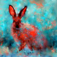 """wild rabbit"" by rosalin"
