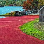 """""""Cranberries"""" by ginacormier"""