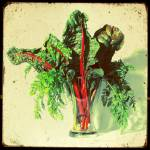 """Swiss Chard Bouquet"" by Crayonmonster"