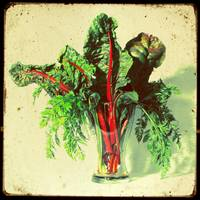 Swiss Chard Bouquet