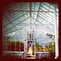 White Greenhouse
