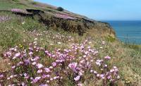 Farewell to Spring at Mori Point