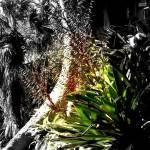 """""""Orchid"""" by sensaze"""