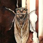 """Cicada"" by CuriousInk"
