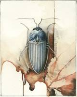 Beetle Two