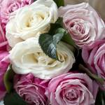 """Clouse-up of white roses and pink mottled"" by fotofollia"
