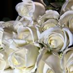 """A Clouse-up of white roses"" by fotofollia"