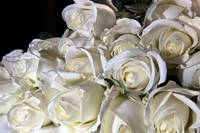 A Clouse-up of white roses