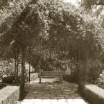 """""""Huntington Garden Bench Sepia by K. Yaude"""" by kyaudeart"""