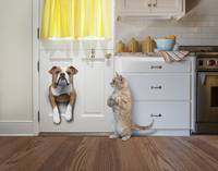 English Bulldog Stuck In The Cat Door