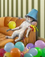 Funny Party Cat With A Hangover