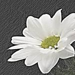 """""""Daisy 1"""" by KelliDee"""
