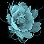 """Ice Flower 1"" by KelliDee"