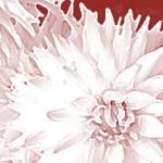 """""""Starburst 3"""" by KelliDee"""