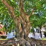 """""""Snug Harbor Tree 01"""" by mpepe"""