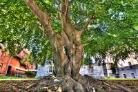 Snug Harbor Tree 01