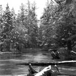 """Jordan River Snowfall III"" by GABrittImages"