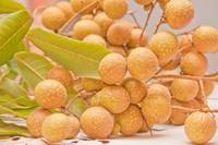 Close up of Longan(euphoria langana) fruits.