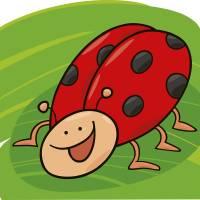 ladybug Art Prints & Posters by Igor Zakowski