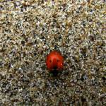 """lady bug & granules"" by punk"