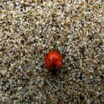 """lady bug & granules"" by punk"