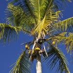 """Ding Darling Palm Tree"" by Wiktor"
