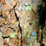 """tree bark in technicolor"" by punk"