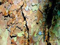 tree bark in technicolor