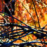 """""""Branching Out    0752-9"""" by BarbaraLin"""