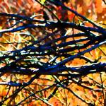 """""""Branching Out    0752-12"""" by BarbaraLin"""