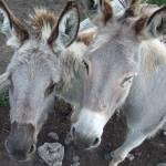 """Donkey shot"" by TerraPhotography"