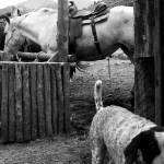 """Trail dog"" by GABrittImages"
