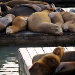 """Sea Lions"" by raetucker"