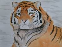 Winter Tiger
