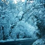 """Winter road"" by karlagarcia"