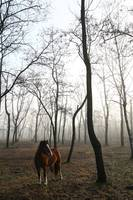 wild horse in the forest