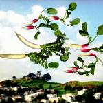 """Flock of Radishes Flying West Over Bernal Hill"" by BethPewther"