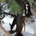 """""""Deer behind tree"""" by karlagarcia"""