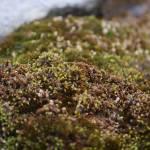 """""""Moss"""" by karlagarcia"""