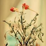 """""""Botanical"""" by doryyounes"""