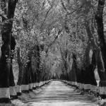 """""""Túnel das árvores"""" by alfarrob"""