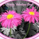 """""""0011.  Pink Valentine"""" by EdmondHogge"""