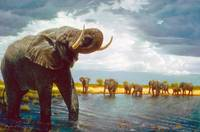 Elephant Walk by the Water Hole